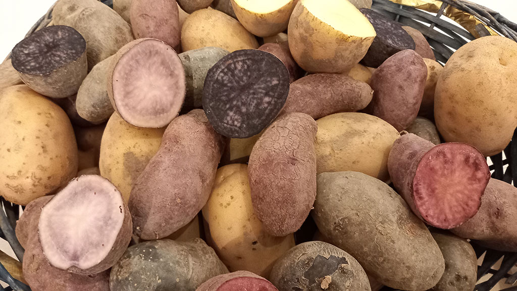 patate-di-montagna