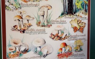 Museo del Fungo di Giaveno